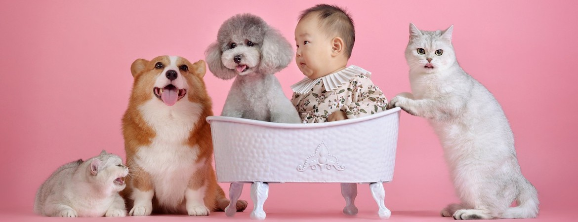 Online Pet Shops in Singapore
