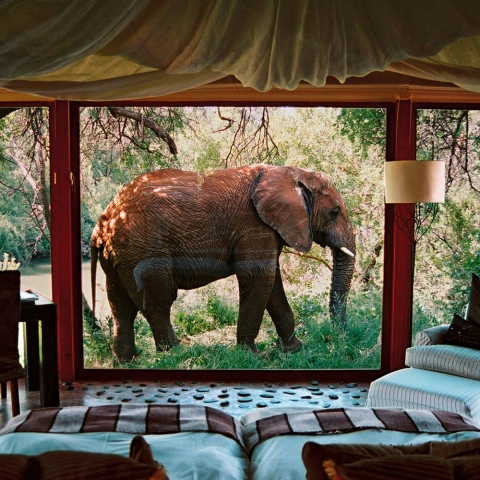 Top Wildlife Glamping Spots for a Luxurious Safari Night - Thumbnail